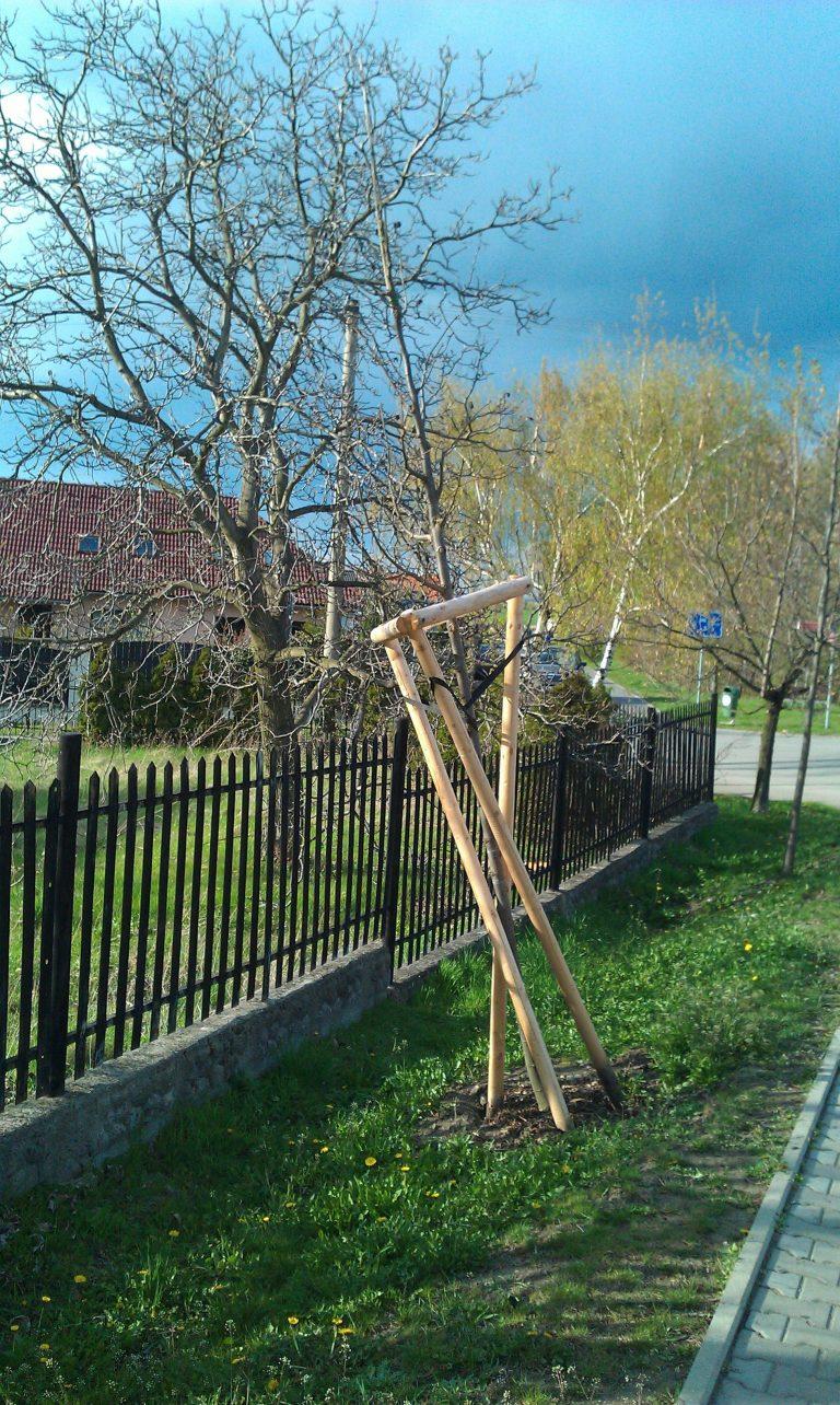 strom vyvraceny 21.4.2012