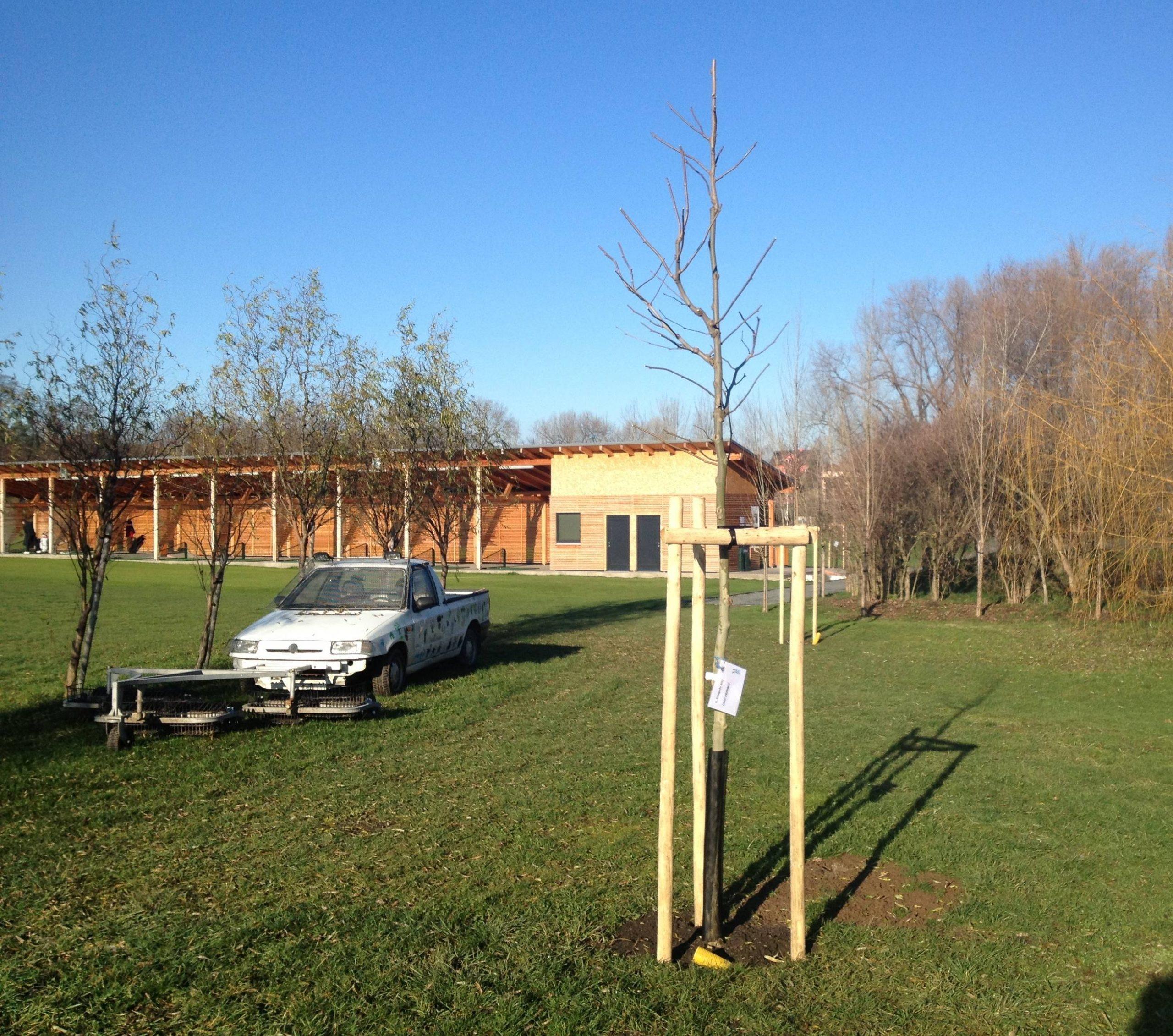 strom yard 11 2012