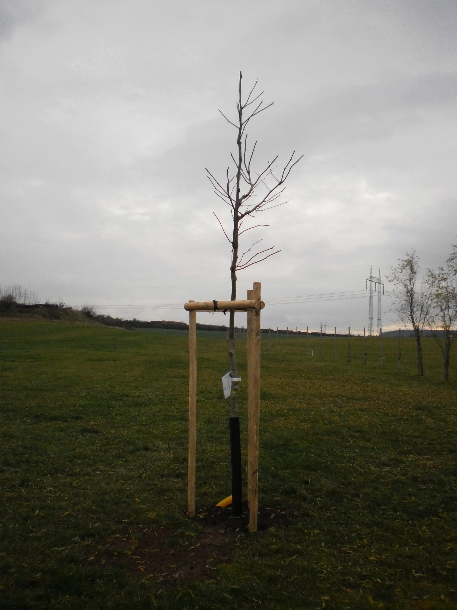 strom yard 2 11 2012