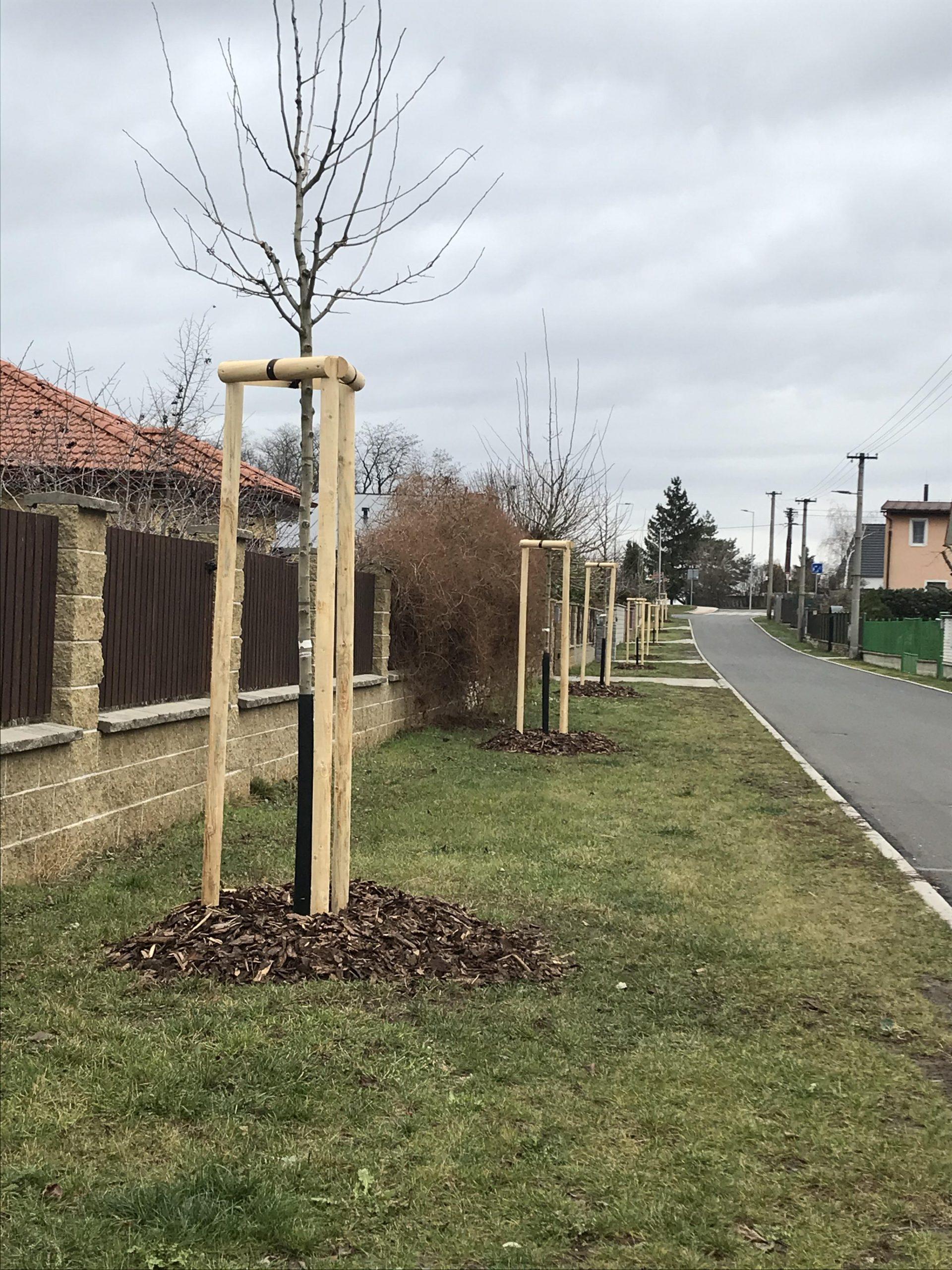 stromy na jarosi 12 2019